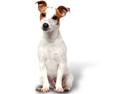 eccfd047fb94 Αλλεργίες σε κατοικίδια (σκύλους  γάτες)